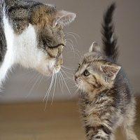Gato conoce a gato